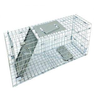 medium-trap