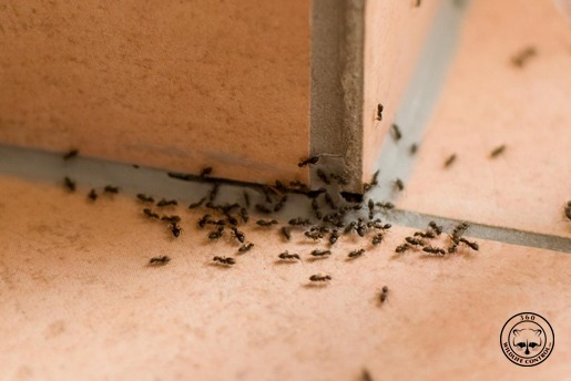 Trusted Wildlife Removal Amp Pest Control In Toronto