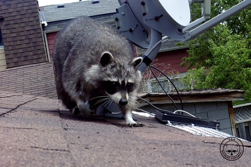 Trusted Wildlife Removal & Pest Control in Toronto